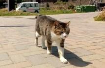 遠くから来た猫