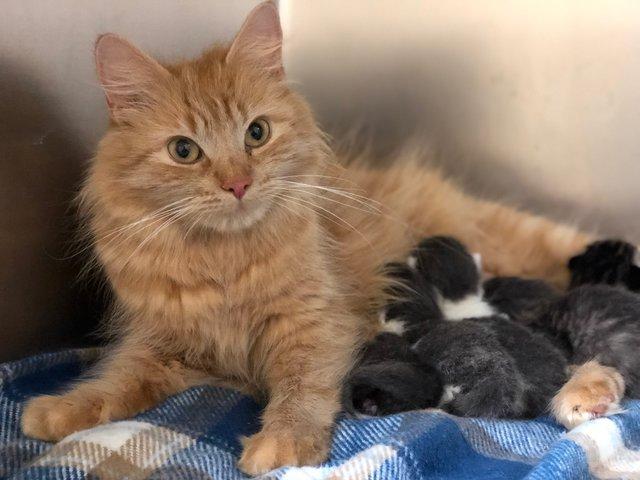 仲良しな子猫と猫