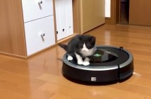 ルンバを乗りこなす子猫