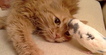 仲良しな猫とインコ
