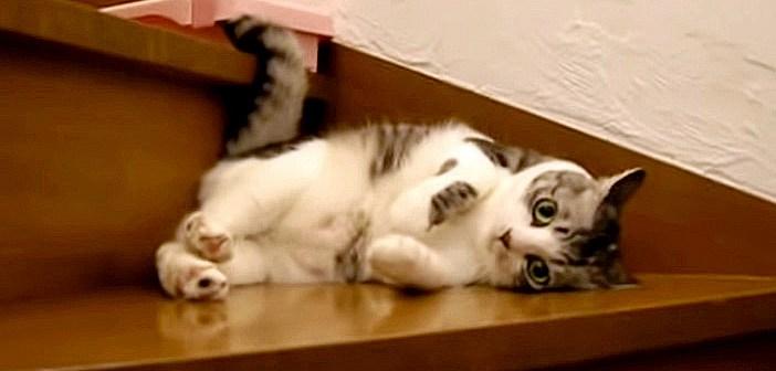 おかえり猫