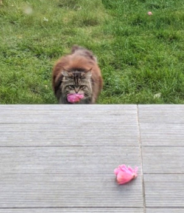 花を咥える猫