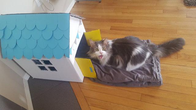 可愛い反応を返す猫