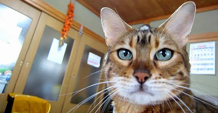 ピカピカの猫
