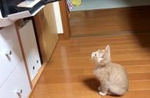 プリントアウトを待つ子猫