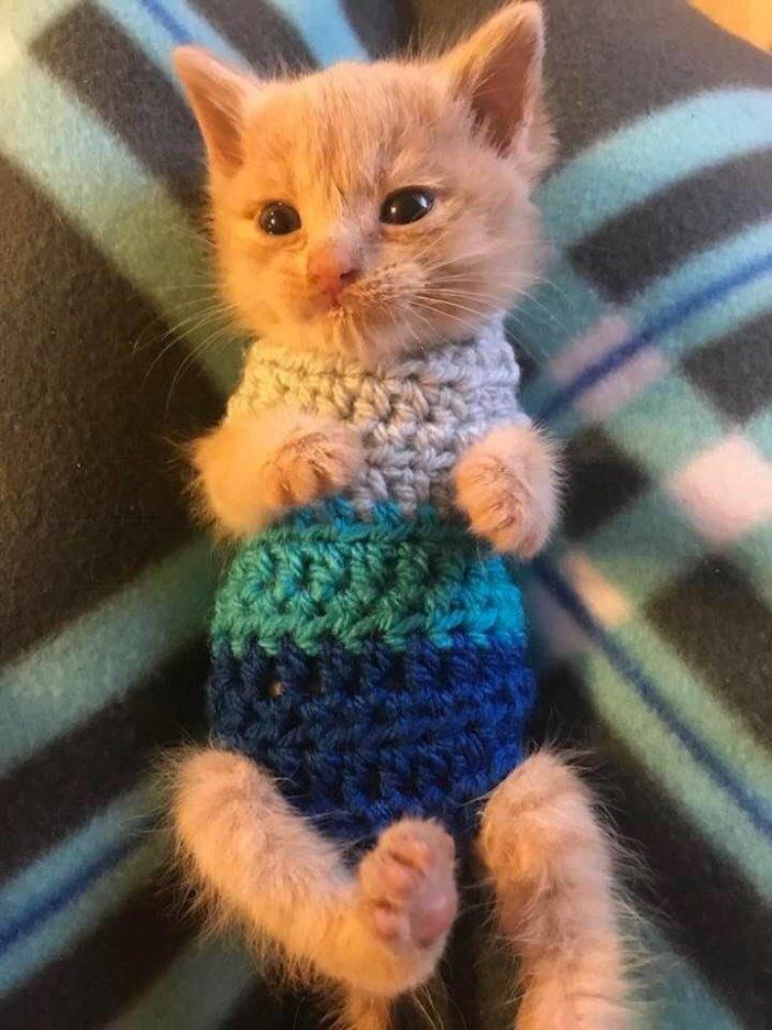 洋服を着た子猫