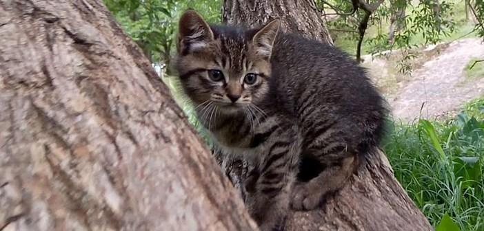 木登り子猫