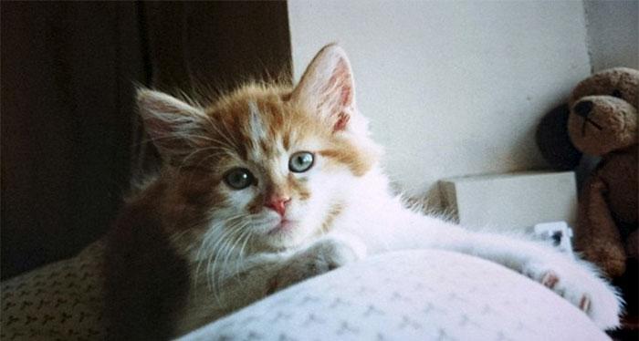 まったりする子猫