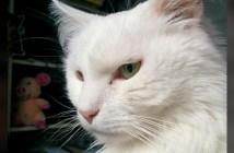 攻撃的な猫