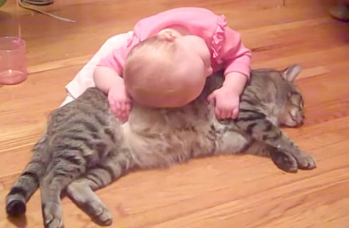 猫好きの赤ちゃん