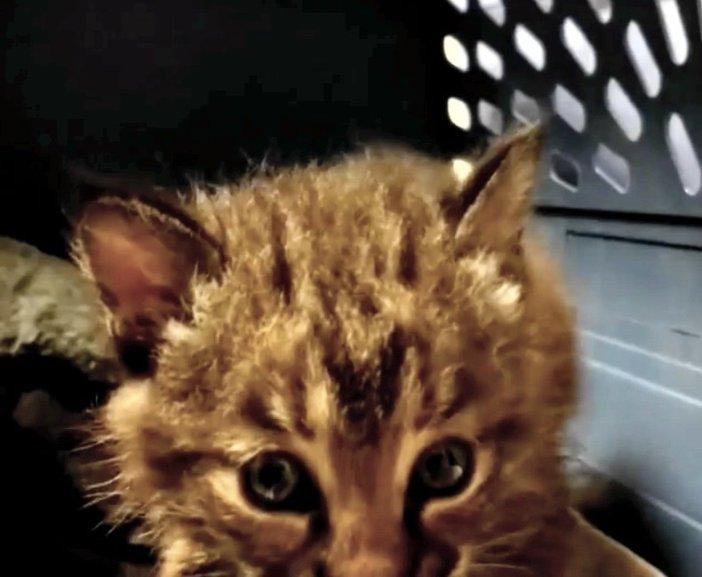 近づく子猫