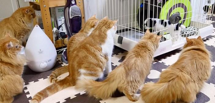犬に興味津々の猫一家