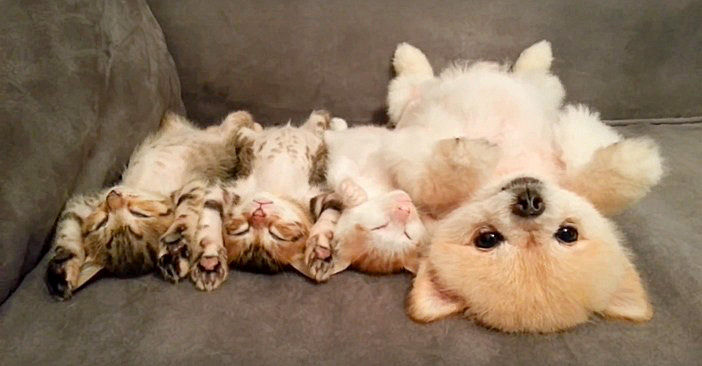 子猫と眠るかわいい子犬