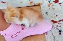 足にしがみついてくる子猫