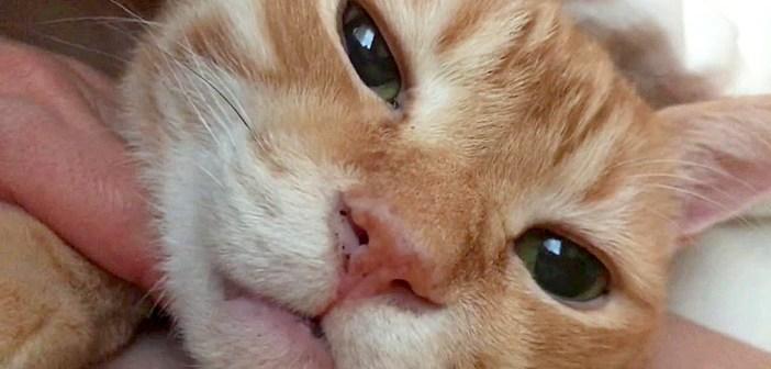 布団に入る猫