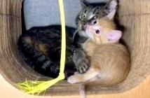 子猫を守る老猫
