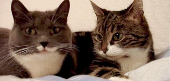 会話する2匹の猫