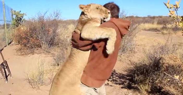 抱き合う男性とライオン