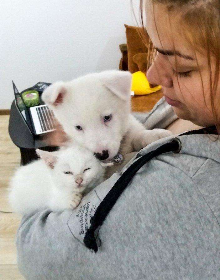 抱っこされる子猫と子犬