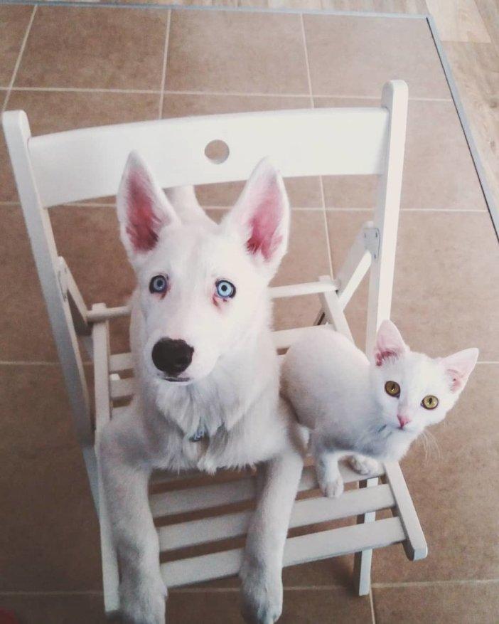 見上げる猫と犬
