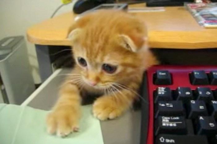 仕事をする子猫