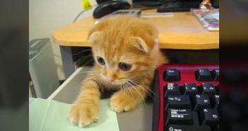 デスクの下から現れた子猫