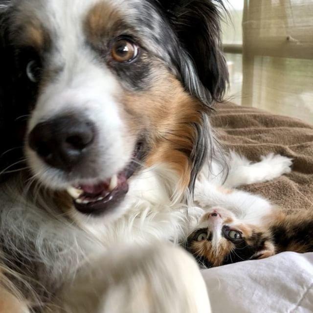 一緒の犬と子猫