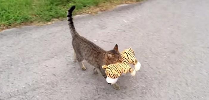 トラのヌイグルミを運ぶ猫