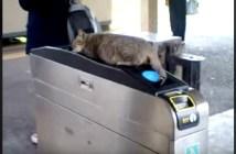 改札で寝ている猫