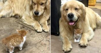 犬と子猫の出会い