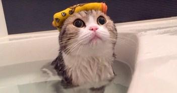 おふろに入る猫