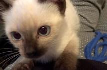 膝の登ってくる子猫
