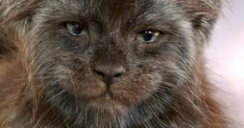 人間のような顔の子猫