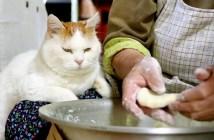 芋餅づくりを見つめる猫