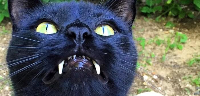 牙の長い猫