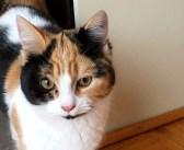 仲良くなった野良猫が、庭に子猫を連れて来た! 人間をとても怖がっていた子猫は、家族の努力でついに家の中へ!