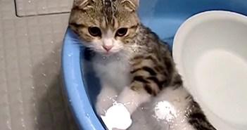 お風呂に浸かる猫