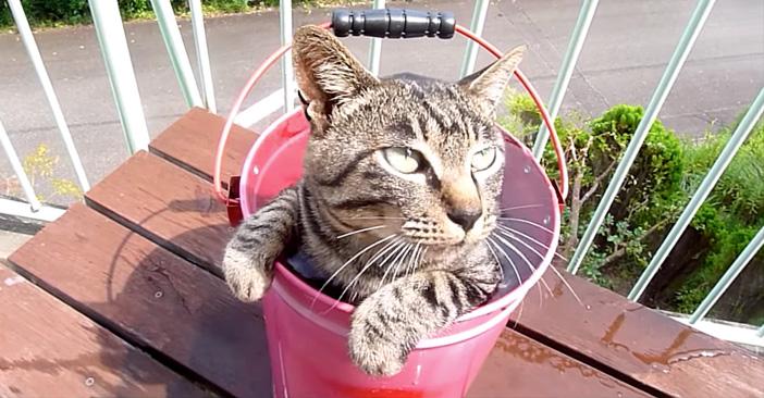 露天風呂が大好きな猫