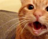 「寂しかったよ〜!」3週間ぶりに飼い主さんと再会した猫さん。その反応がとっても愛らしかった (*´ェ`*)