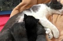 子猫を出産