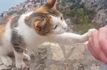 水を要求する猫