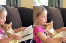 猫に本を読み聞かせる女の子