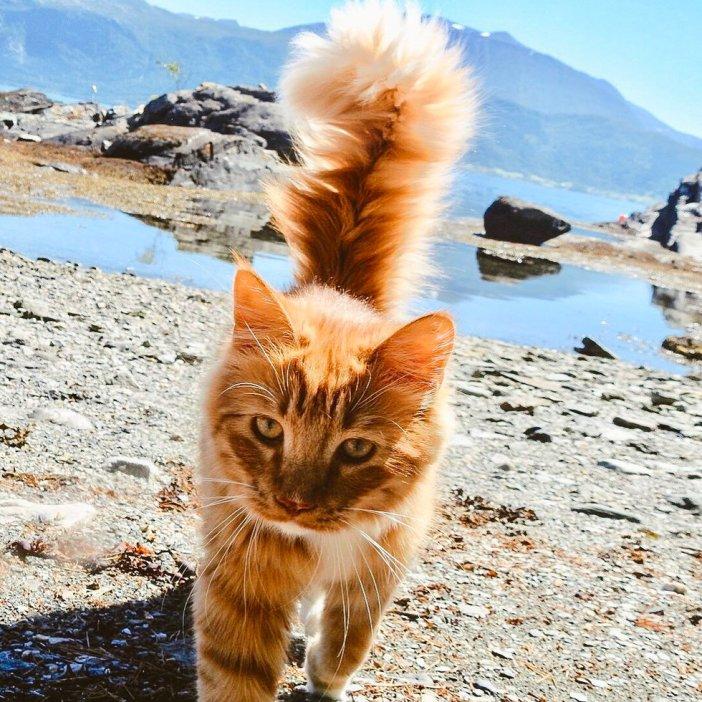 出かける猫