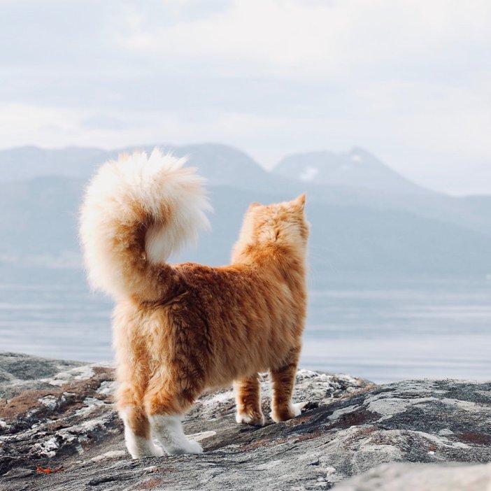 大自然の中の猫