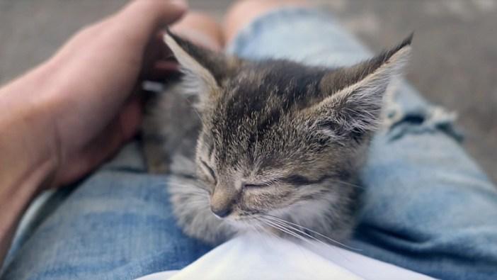 膝の上で眠り始める子猫