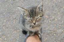 スニーカーの上に乗って来た子猫