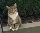 「今日も一緒に遊ぼ♪」親友の猫と遊ぶため、毎日やって来る隣の猫。いつも窓の外で礼儀正しく待っています (*´ω`*)