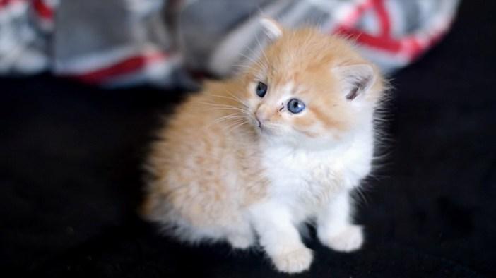 膝に登って来た子猫