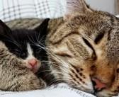 母親のいない子猫の叫び声を聞いた猫。すぐに子猫の元に駆けつけ、新しいお母さんになる