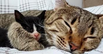 お母さんになった猫